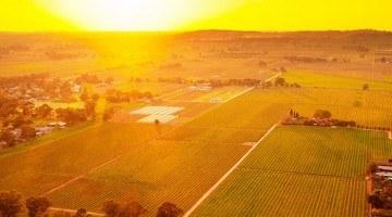 Aerial view of the Elderton Nuriootpa vineyard at sunrise