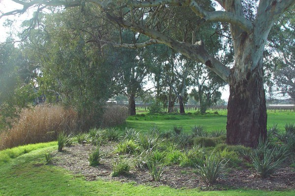 revegetation-project-sustainability