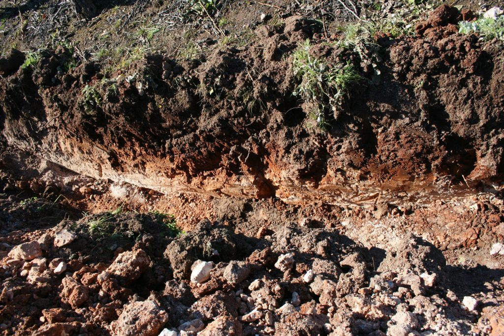 soil in Elderton Greenock vineyard