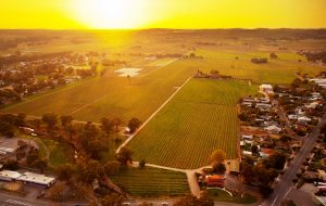 Elderton Barossa Valley wineries