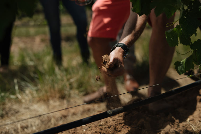 What difference does soil make in wine? soil from Elderton's Command Shiraz vineyard